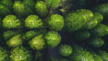 trees-during-day-3573351-e1587543013604-643x245